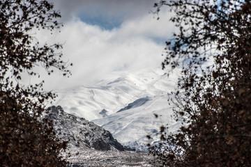 La Sierra Nevada vue de Grenade entre les arbres, station de ski en pleine hiver