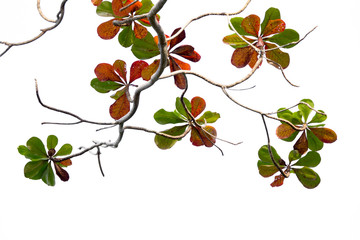 Leaves and branches background