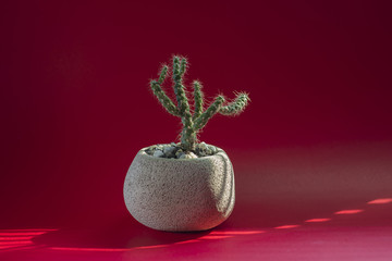 A unique cactus in a concrete pot is placed on a bright red back