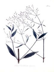 Illustration of palnt.