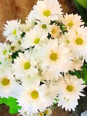 A Vase Of White Daisies