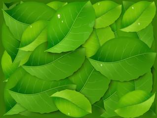 pile of green fresh realistic leaves, freshness,