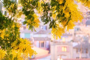 Papiers peints Orange Branches de mimosas en fleurs, les silhouettes floues des maisons en arrière-plan. Sud de France.
