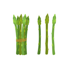 Green asparagus, butch of ripe asparagus sprout. Vegetarian nutrition. Made in cartoon flat style. Vector illustration