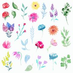 Vintage set with twenty seven  plant elements. Watercolor hand drawn illustration