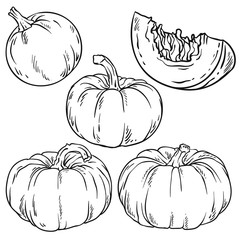 Vector set of pumpkin. Line art style. Isolated on white background.