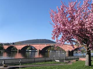 Mainbrücke in MIltenberg am Main im Frühling