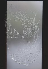Close-up of wet spider web