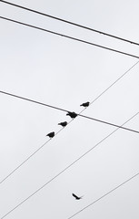 Low angle view of silhouette birds perching on cable against clear sky