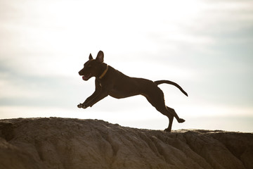 Dog running on rock against sky during sunny day