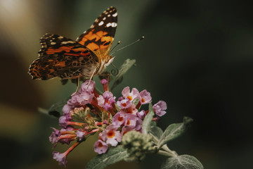 Close-up of butterfly pollinating on fresh flowers