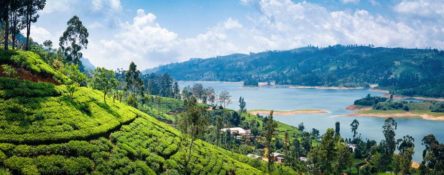 Beautiful view on tea plantation near Nuwara Eliya, Sri Lanka