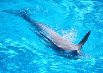 La poesia è come il canto dei delfini. Non tutte le orecchie possono percepirla.