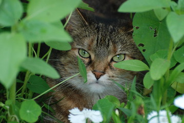 Grey Tabby Cat in the leaves
