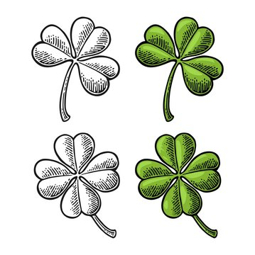 Good luck four and three leaf clover. Vintage vector color and black engraving illustration for info graphic, poster, web. Black on white background