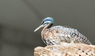 Small beautiful bird in a city zoo