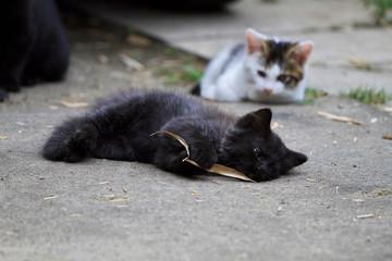 葉っぱにじゃれる子猫