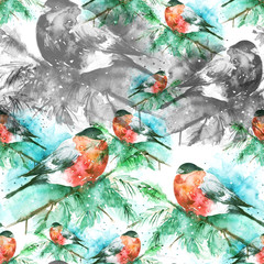 Seamless watercolor pattern with a picture of a bird, bullfinch. A bird on a spruce branch. Black and white drawings. The bird is red. Watercolor card.