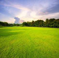 beautiful green grass field public park against morning sky background
