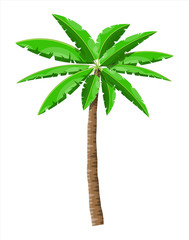 Tropical green palm. Jungle leaves