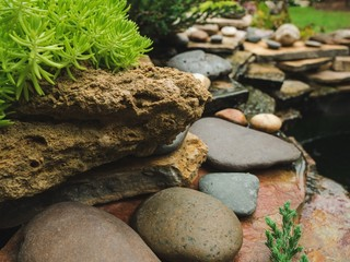 stone garden plant green nature rock