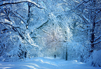 Winter photo landscape