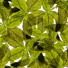 Basil Leafs Seamless Pattern. Repeatably Hand Drawn Background with Spice Herb and Basil.