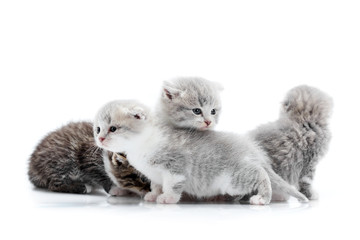 Grey blue-eyed little fluffy kittens playing and jumping on one another, one looking to the side. White background photoset. Adorable small funny curious cats gray fur animals paws cute newborn