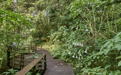At Sun Moon Lake (Taiwan) there are many paths in the forest and