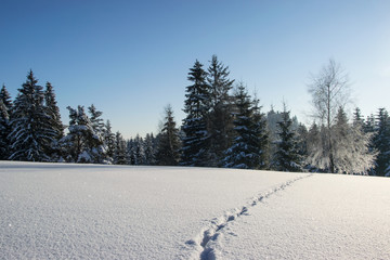 Picturesque mountain landscape - traces of a wild animal in the snow on a frosty and sunny morning