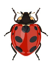 Icon painted ladybug. Beetles. Vector illustration