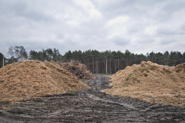 A large pile of pine wood shavings stored by the road in the forest.