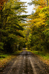 One Lane Gravel Road at Peak Autumn - Finger Lakes National Forest - New York