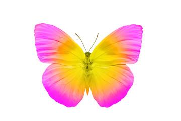 Бабочка с яркими розово-желтыми крыльями, изолирована на белом фоне
