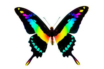 Бабочка большая, радужного цвета, изолирована на белом фоне