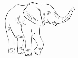 illustration of elephant, vector drawing