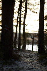 Picture of snow trail, pond and trees in woods