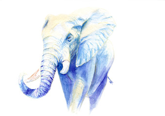 watercolor elephant. sketch