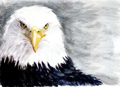 watercolor eagle. sketch