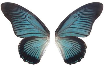 wings blue butterfly