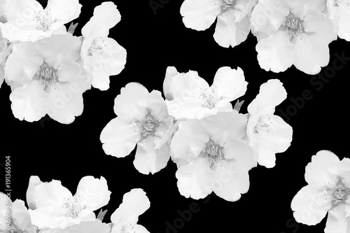 Black and white sakura almond flowers pattern isolated on black black and white sakura almond flowers pattern isolated on black background white flowers close mightylinksfo