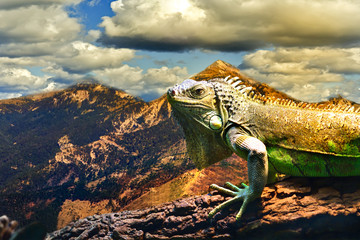 Agama sitting on a tree on the background of a mountain landscape