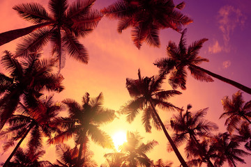 Vivid tropical beach sunset with big warm shining sun on vacation island. Tropical palm trees silhouettes at sunset light.