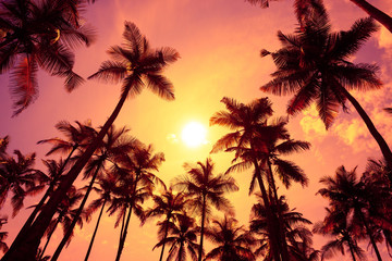 Warm tropical sunset