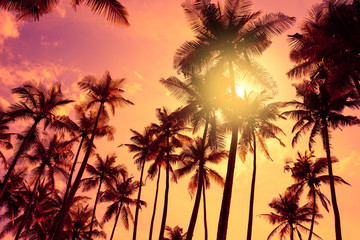 Tropical palm trees silhouettes at sunset.