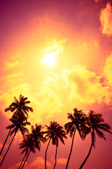 Tropical palm trees at sunset beach with shining sun and colorful clouds as copy space
