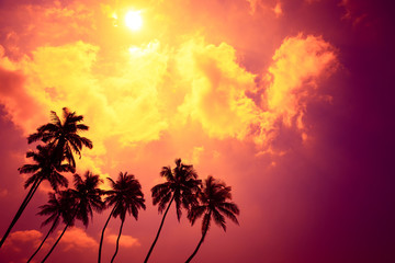 Tropical palm trees at sunset beach on vacation island with shining sun and colorful clouds as copy space