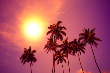 Palm trees at vivid sunset with colorful sky and shining sun circle
