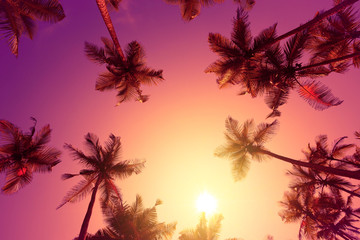 Vivid warm tropical sunset with palm trees