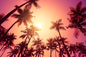 Tropical sunset on a beach with palm trees